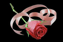Rose surrounded with red ribbon. Red rose on black background surrounded with red ribbon Royalty Free Stock Photo