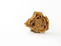 rose suszone zdjęcie royalty free
