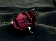 rose suszone fotografia stock