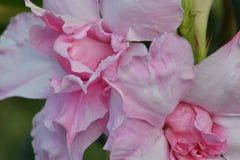 Rose Swirl Petal Abstract rosada 02 imagen de archivo