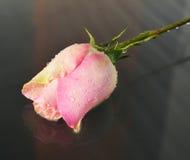 Rose, symbole d'appréciation Photos stock