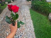 rose szczęśliwy obraz stock