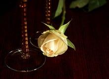 rose tabellwhite Royaltyfri Bild