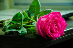 Rose on table Royalty Free Stock Image
