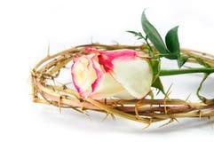 rose taggar för krona Royaltyfri Fotografi