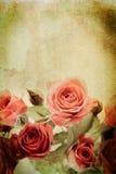 rose tappning Arkivbild