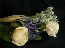 rose tappning Royaltyfri Fotografi
