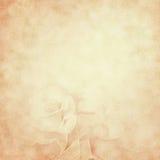 rose tappning för bakgrundsblommor Royaltyfria Bilder