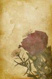 rose tappning för bakgrundsimprint Arkivfoto