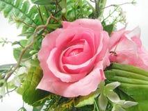 rose tappning för pink Royaltyfria Foton