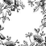 rose tappning för ram stock illustrationer