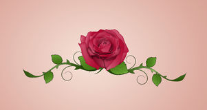 Rose tattoo Royalty Free Stock Images