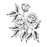 Rose tattoo. Silhouette of roses royalty free illustration