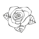 Rose in tattoo style Stock Photo