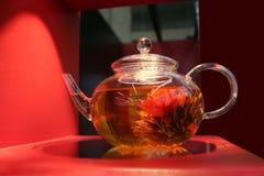 Rose tea Stock Images
