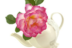 Rose In A Teapot Stock Photography