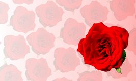 Rose with rose textured background. royalty free illustration