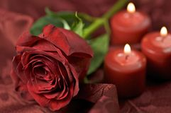 Rose Theme. Red Fresh Cut Rose and Three Burning Candles. Great Composition for Any Occasion Royalty Free Stock Photo