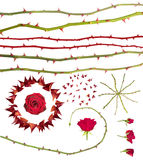 Rose thorns collection Stock Image