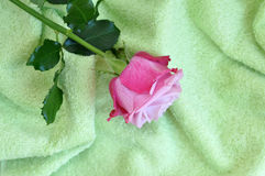 Rose on Towel Stock Image