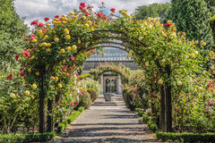 Rose trädgård i botanisk trädgård Royaltyfri Bild