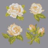 Rose trasversali del punto di vettore immagine stock