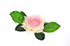 Rose trennte Stockbild