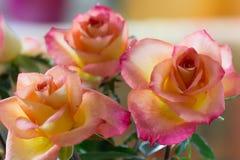 Rose Trio arancio Fotografia Stock Libera da Diritti