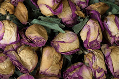 Rose trocken stockfoto