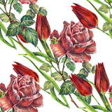 Rose and tulips flower,  watercolor, pattern seamless Royalty Free Stock Photo