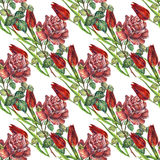 Rose and tulips flower,  watercolor, pattern seamless Stock Photos