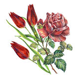 Rose and tulips flower,  watercolor, pattern Royalty Free Stock Image