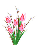 Rose tulips and willow. Bunch of spring rose tulips and willow on a white background Royalty Free Stock Photos