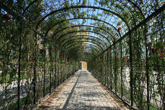 Rose tunnel. Rose trellis from the garden of Schoenbrunn Palace in Vienna, Austria Stock Image