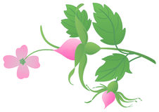 Rose twig. With a flowers, buds royalty free illustration
