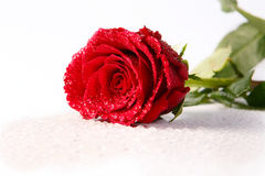 Rose u. Tropfen auf Weiß Stockfotografie