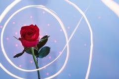 Rose umgab mit Licht Lizenzfreie Stockfotografie