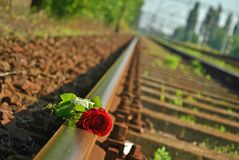 Rose un ferrocarril imagen de archivo