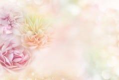 Rose in un fondo pastello molle, che trasporta i concetti del giorno del ` s del biglietto di S. Valentino di amore immagini stock
