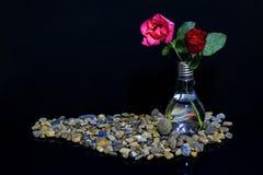 Rose in un vaso con un pesce Fotografia Stock