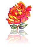Rose und Blätter mit Reflexions-Aquarell Stockfotos