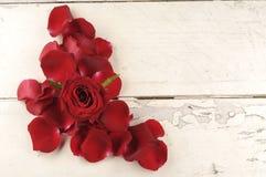 Rose und Blumenblätter über hölzernem Hintergrund Lizenzfreie Stockfotografie