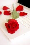 Rose und Blumenblätter auf Laptop Lizenzfreies Stockfoto