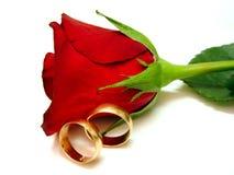 Rose und Gold Stockbild