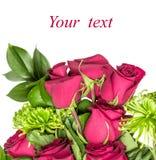 Rose und grüne Chrysantheme Lizenzfreies Stockbild