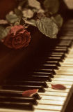 Rose und Klavier Stockfoto