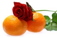 Rose und Mandarinen Stockbild