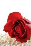 Rose und Perlen auf Weiß Stockfotografie
