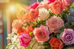 Rose und warmes Licht im Gartenhintergrund lizenzfreie stockbilder