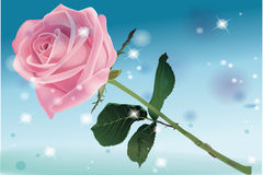 Rose under the sky Royalty Free Stock Photography